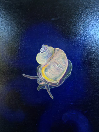 Hyalogryina is a newly discovered species of sea snail, very beautiful. It is pearly with a bright yellow stripe! It is 3-4mm in length. Oil paint and mica powder on panel.
