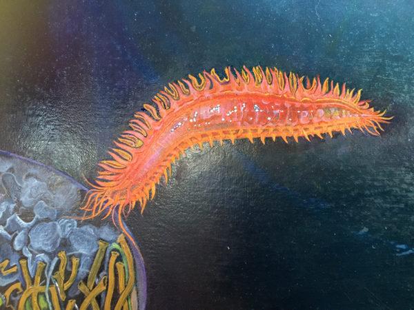PARASTICHOPUS (orange sea cucumber)