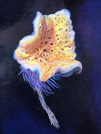 The newest specimen from my ROSEBUD painting for Greg Rouse of SIO. This is a Glass Sponge (porifera) found living on the ocean floor near the Rosebud Whale Fall. An Anemone has colonized on the spicule, i.e. the stalk—a double helix of glass strands. It is not yet known how the glass is produced by the sponge. Oil paint on panel, 2018.
